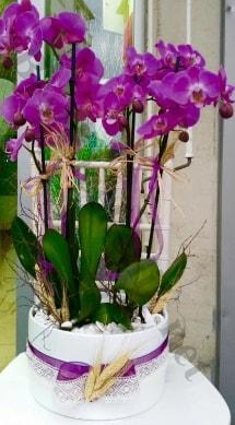 Seramik vazoda 4 dallı mor lila orkide  Aksaray online çiçek gönderme sipariş