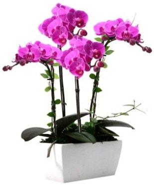 Seramik vazo içerisinde 4 dallı mor orkide  Aksaray çiçek satışı
