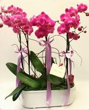 Beyaz seramik içerisinde 4 dallı orkide  Aksaray ucuz çiçek gönder