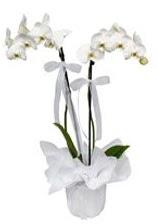 2 dallı beyaz orkide  Aksaray güvenli kaliteli hızlı çiçek