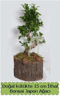 Doğal kütükte İthal bonsai japon ağacı  Aksaray çiçek gönderme