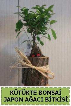 Kütük içerisinde doğal bonsai ağacı  Aksaray çiçekçi telefonları