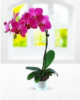 Tek dallı mor orkide  Aksaray çiçek satışı