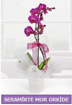 Seramik içerisinde birinci kalite tek dallı mor orkide  Aksaray İnternetten çiçek siparişi