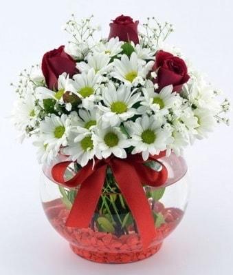 Fanusta 3 Gül ve Papatya  Aksaray internetten çiçek satışı