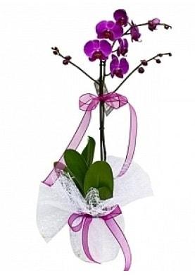 Tekli Mor Orkide  Aksaray çiçek yolla