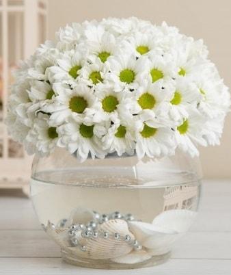 Fanusta beyaz Papatya  Aksaray çiçek satışı