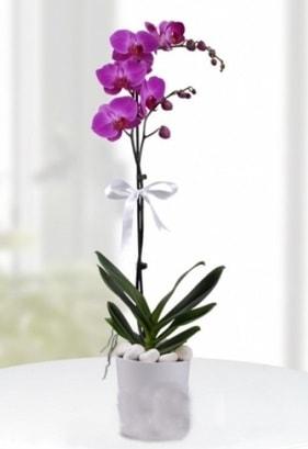 Tek dallı saksıda mor orkide çiçeği  Aksaray çiçekçiler