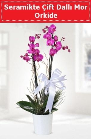 Seramikte Çift Dallı Mor Orkide  Aksaray anneler günü çiçek yolla